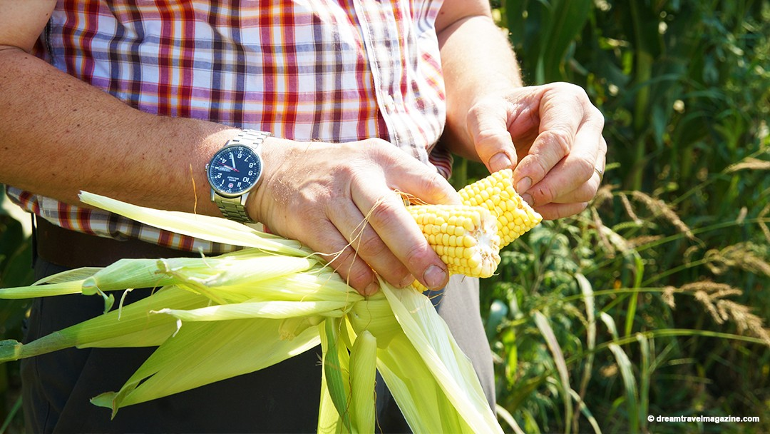 Community Corn Roast – August 8
