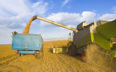 The Grain Economy