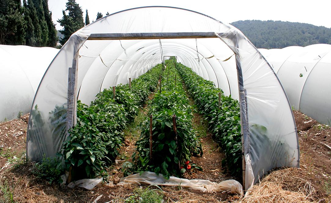 Principals of Organic Farming