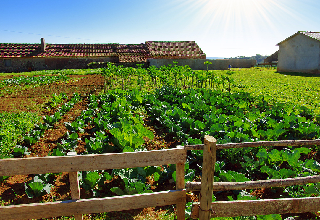 how is organic farming different than natural farming