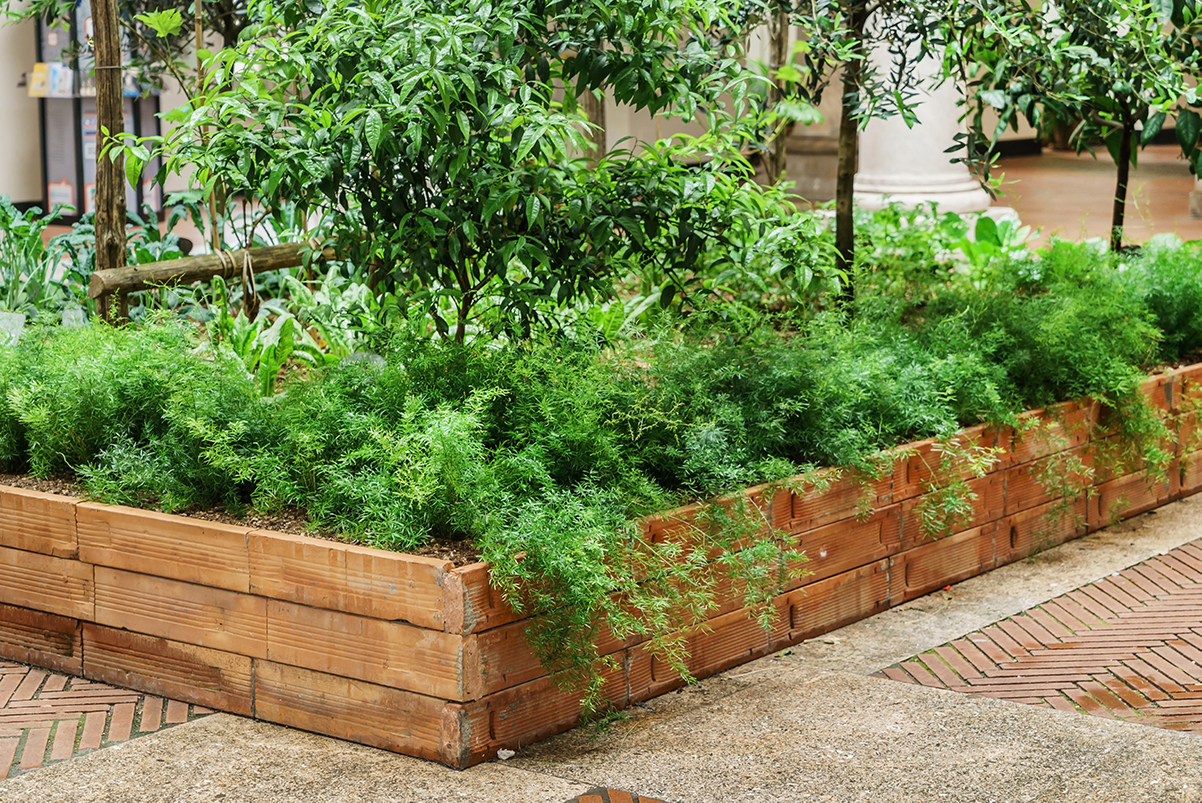 Urban garden and regenerative agriculture
