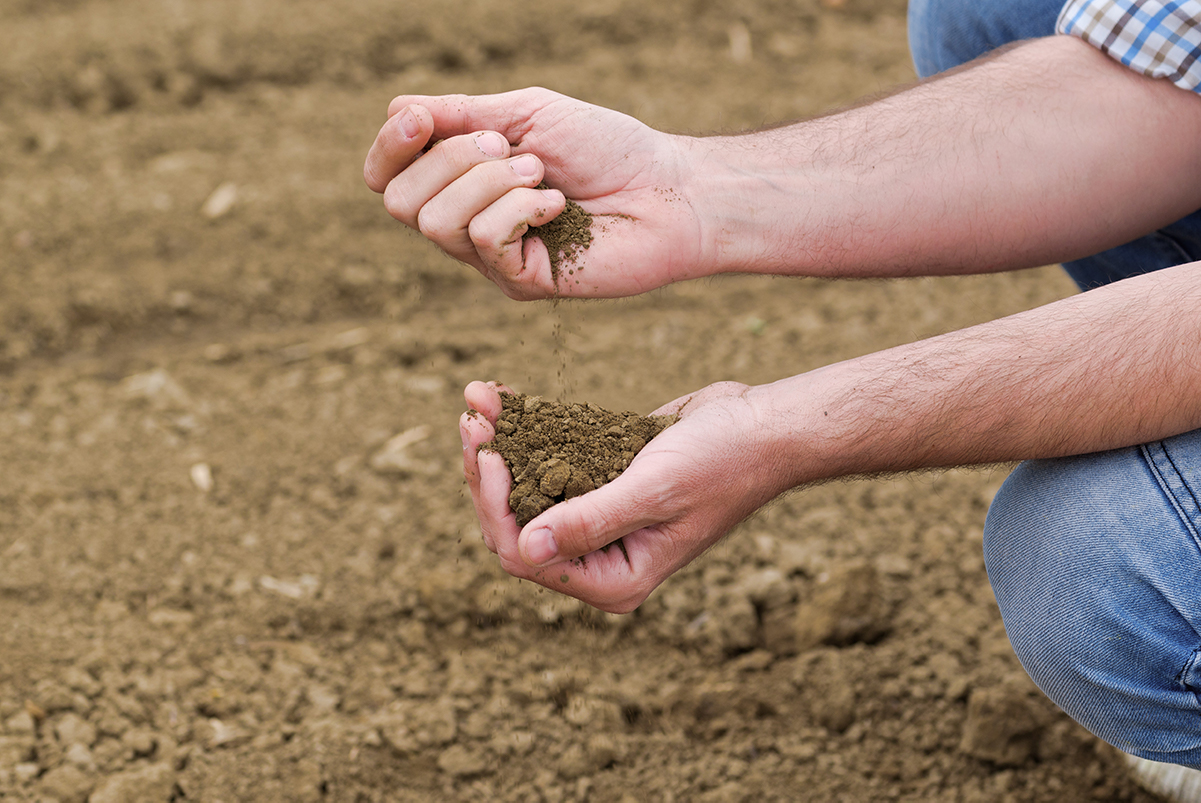 Climate change and soil health farmer holding soil in hand